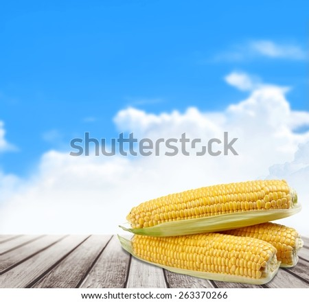 Corn. An ear of corn isolated on a white background - stock photo
