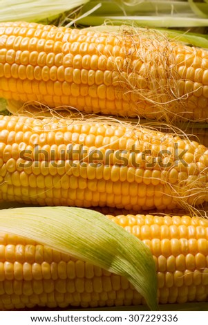 Corn background. Corn close-up. Grains of corn with leaves.  - stock photo