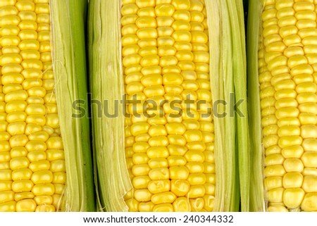 Corn background texture - stock photo