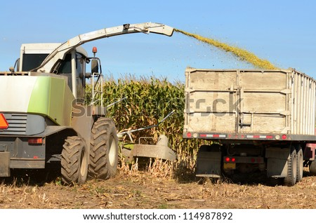 Corn farm field being harvested by a combine for agricultural feed - stock photo