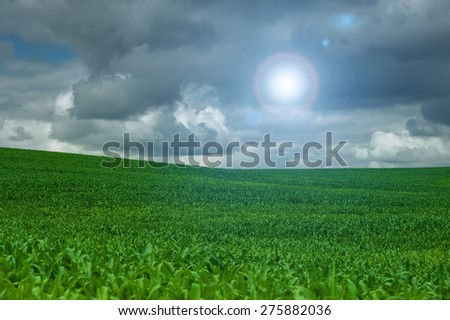 corn field and blue sky cloud outdoor shots