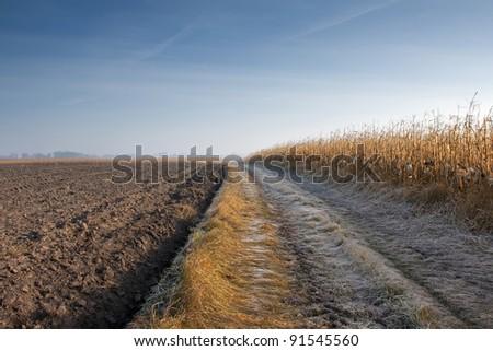 Corn Field in frost - stock photo