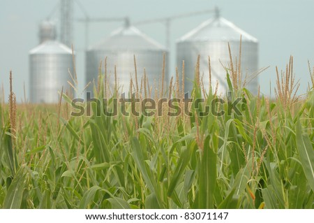 Corn field with grain mill background - stock photo