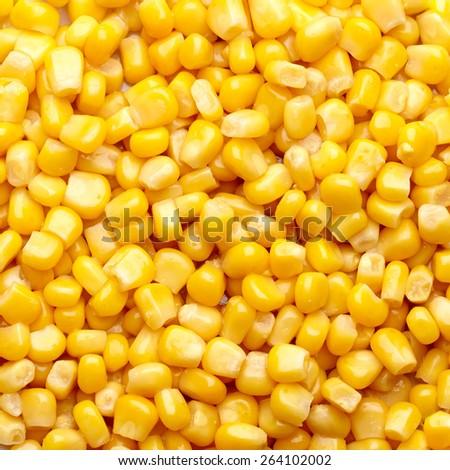 Corn grain texture. Top view. - stock photo