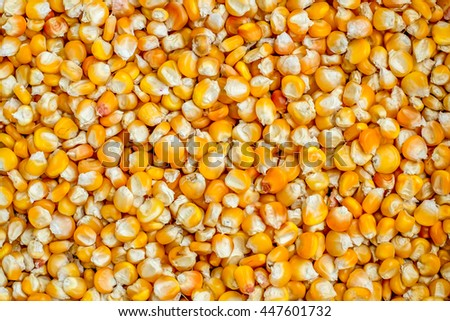 Corn grains. Suitable for use in projects on imagination, creativity and design. Abstract texture background.