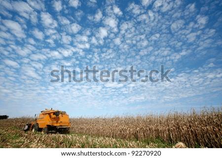 corn harvest on farmland in brazil - stock photo