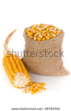 Corn in small burlap sack - stock photo