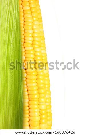 Corn isolated on white background. - stock photo
