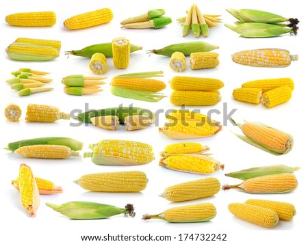 corn isolated on white background - stock photo