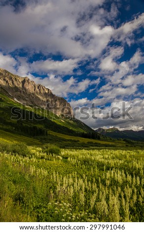 Corn Lily Meadow at Gothic Mountain, Crested Butte, Colorado