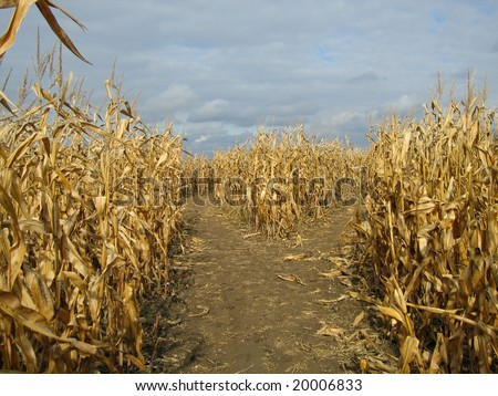 Corn Maze in Dundee, Michigan - stock photo