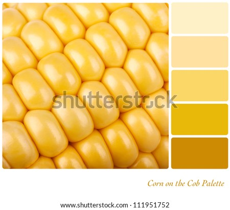 Corn on the cob background. Colour palette of complimentary shades. - stock photo