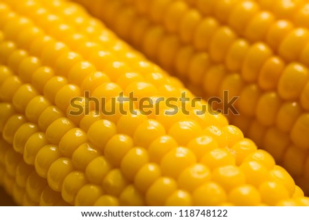 Corn on the cob detail - stock photo