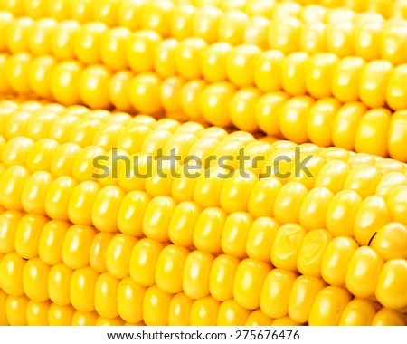 Corn on the cob kernels close up shot