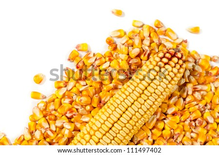 Corn seed isolated on white. - stock photo