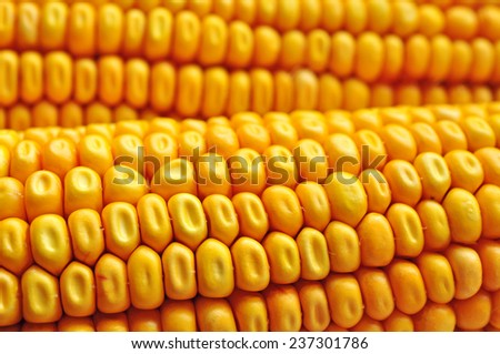Corn seeds texture, agriculture - stock photo