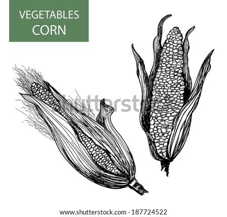 Corn-set of vector illustration - stock photo