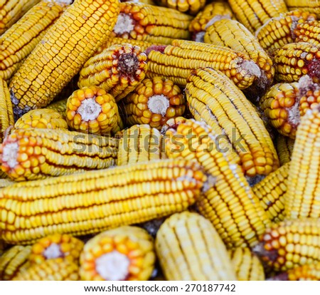 Corn stored for winter background - stock photo