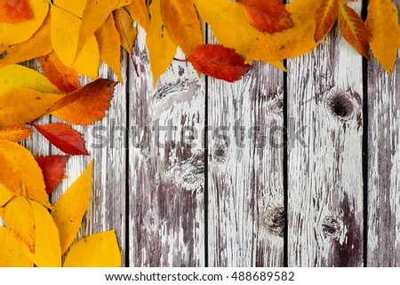 Corner border of colorful autumn leaves on a rustic white wood background