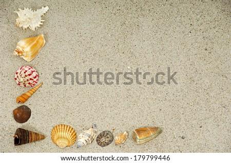 Corner with many different seashells.  - stock photo