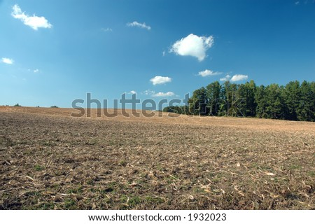 Cornfield at harvest time