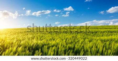 cornfield panorama with cloudy sky - stock photo
