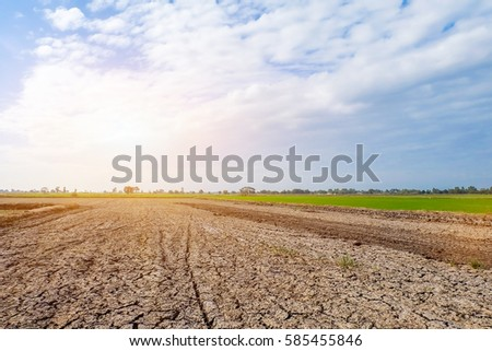 cornfield sunset background in Thailand.