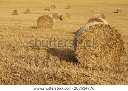 cornfield with blue sky - stock photo
