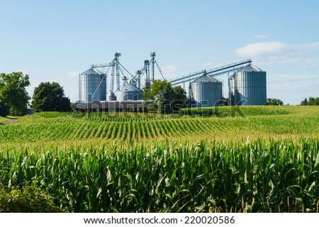 Cornfield with silos and farm in the distance - stock photo