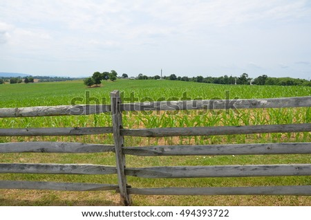 cornfield with wooden fence