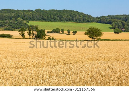 Cornfields on the slope of the hill - stock photo