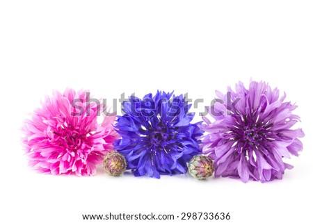 cornflowers on white background - stock photo