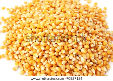 Corns kernel close up picture. - stock photo
