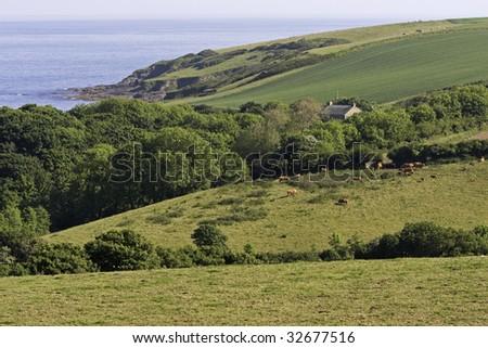 Cornwall coastal countryside - stock photo