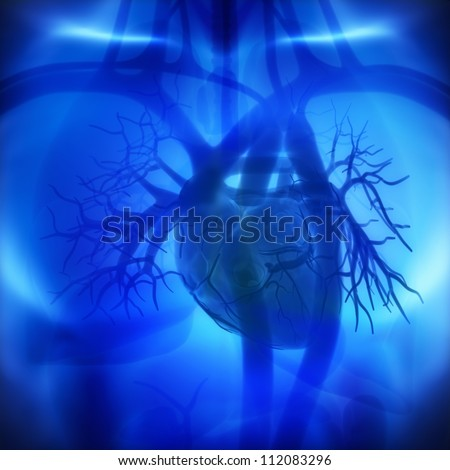 Coronary arteries, auricles, ventricles in human heart - stock photo