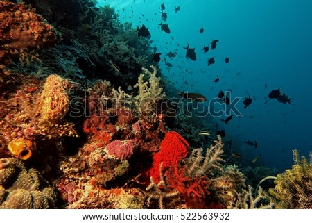 Corral Reef on Selayar Island, South Celebes, Indonesia