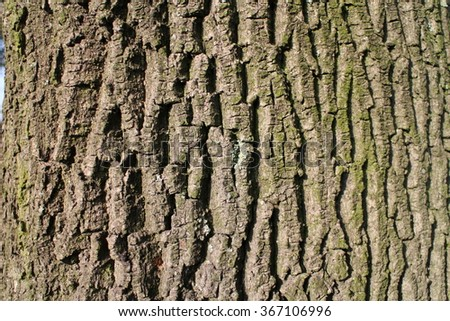 Cortex (rind, bark) of tree trunk - stock photo