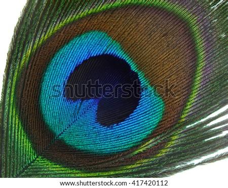 coseup of peacock tail - stock photo