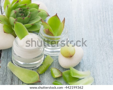 cosmetics with houseleek - stock photo
