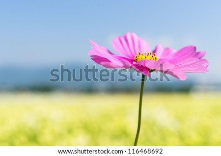 Cosmos and Autumn Sky - stock photo