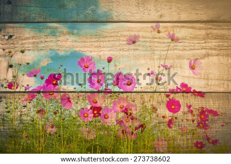 cosmos flower field on wooden texture background. vintage color tone with filter color effect. - stock photo