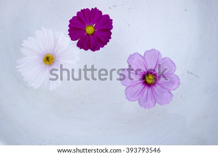 Cosmos flower on water - stock photo