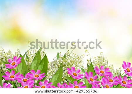 cosmos flowers. Beautiful flowers cosmos. Summer landscape.