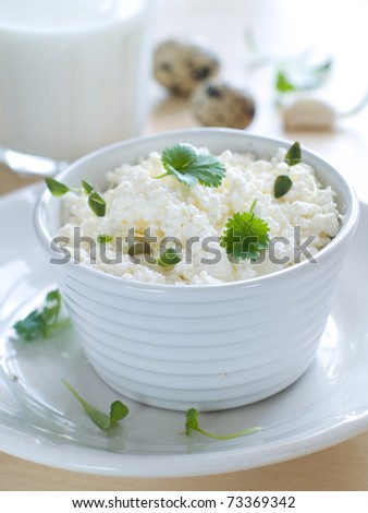 Cottage cheese in bowl. Healthy food