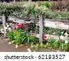 Cottage Garden 2 - stock photo