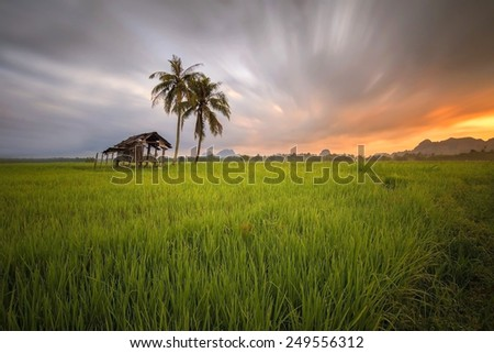 cottage in paddy fields and a tree with a beautiful sunset