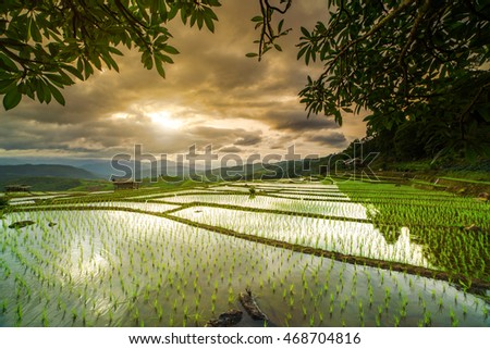 cottages on rice field in pa bong piang chiang mai thailand