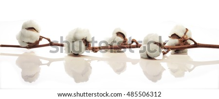 Cotton branch against a white color and brilliant background. Horizontal view for banner use.