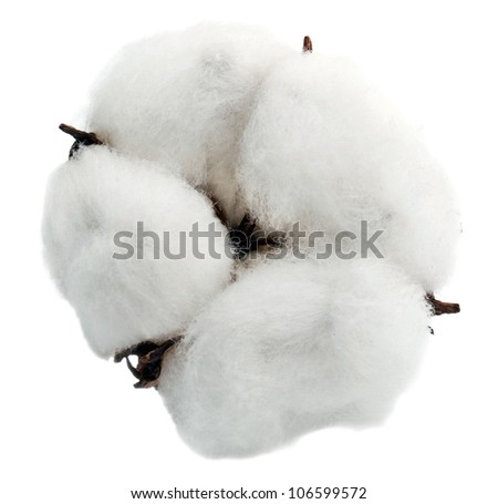 Cotton isolated on white background - stock photo