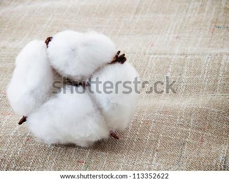 Cotton plant on the cotton texture - stock photo